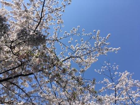 nagonojin_4.jpg