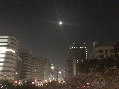sakura_2.jpg