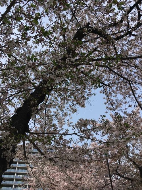 sakura_f2.jpg